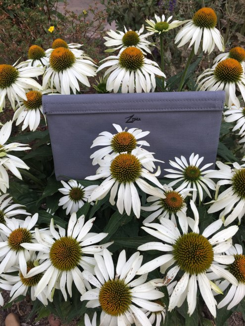 zzinia daisies