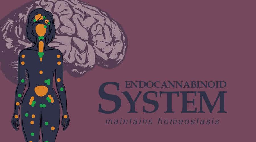 Anxiety and the EndocannabinoidSystem