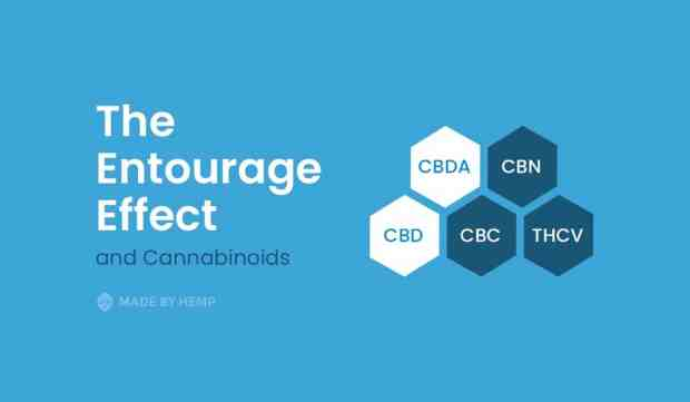 The-Entourage-Effect-and-Cannabinoids
