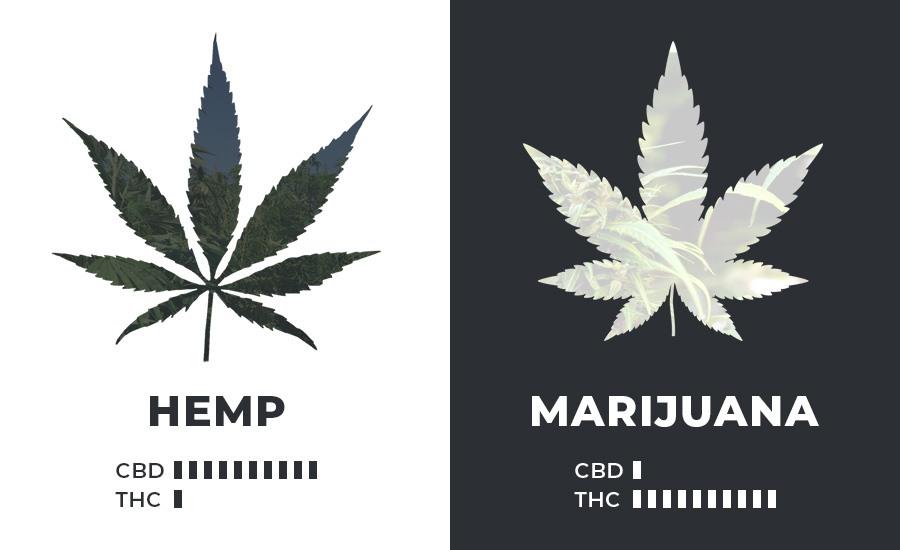 hemp-marijuana-cannabinoids