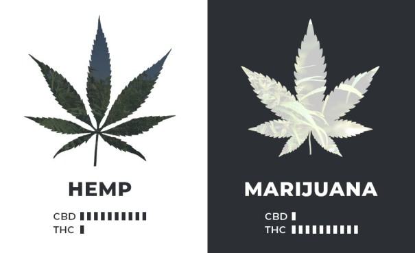 hemp-marijuana-cannabinoids