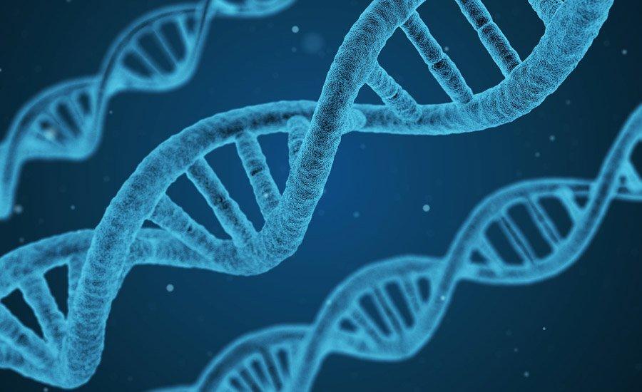 hemp-vs-marijuana-genetics