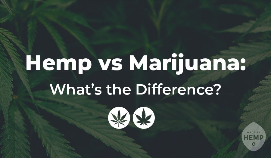 Hemp vs Marijuana: What's theDifference?